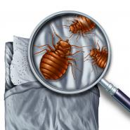 bed bugs, pest control ga, bed bug control