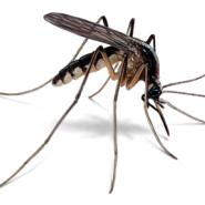 mosquitos, pest control, summer bugs, east coast